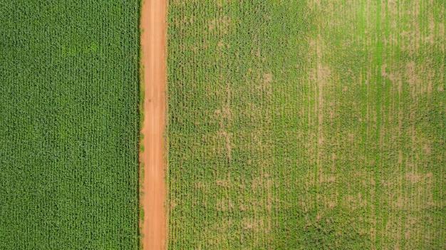 Bovenaanzicht van maïsvelden