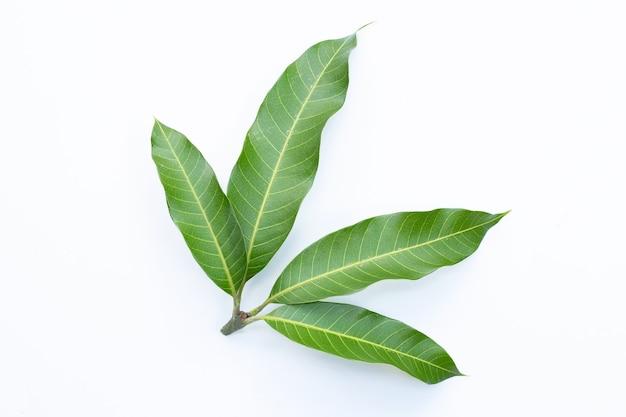 Bovenaanzicht van mangobladeren op witte muur.