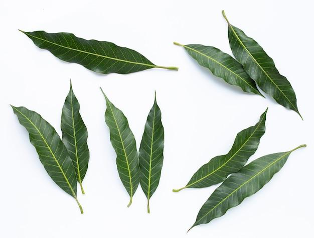 Bovenaanzicht van mangobladeren.