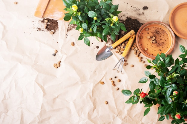 Bovenaanzicht van mini roses in keramische bloempotten en tuingereedschap met vrije ruimte voor tekst.