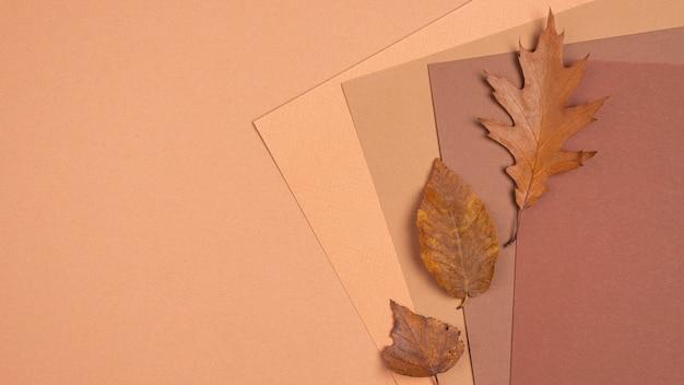Bovenaanzicht van monochromatische kleuren en bladeren