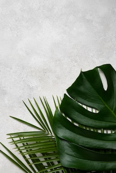 Bovenaanzicht van monsterablad en andere planten met kopie ruimte