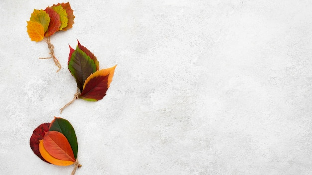 Bovenaanzicht van mooie herfstbladeren met kopie ruimte en string