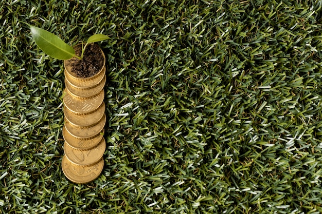 Bovenaanzicht van munten op gras met plant- en kopieerruimte