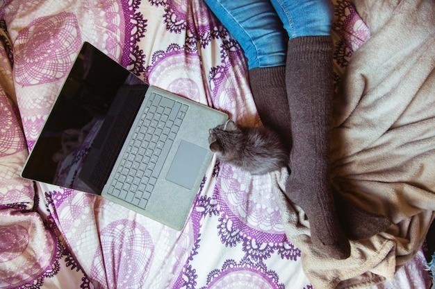 Bovenaanzicht van nieuwsgierige kat spelen met computer op het bed. onherkenbare vrouw in haar slaapkamer met laptop.