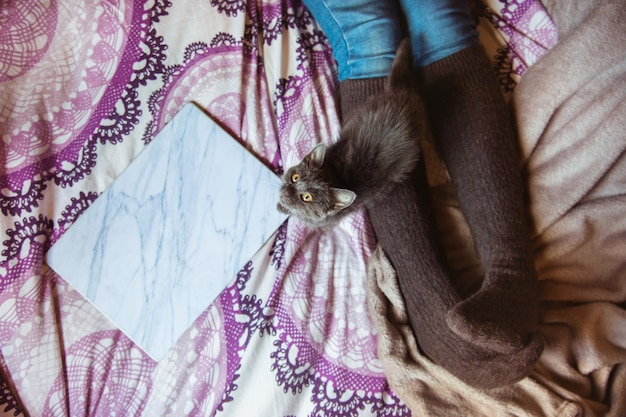 Bovenaanzicht van onherkenbare vrouw in haar bed met kat en computer. huisdieren en dieren concept.
