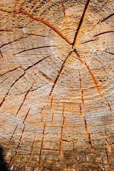 Bovenaanzicht van oude stomp gebruikt als een rustplaats. hout textuur