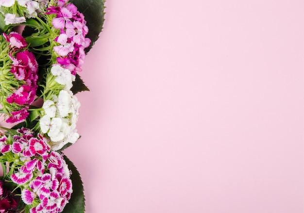 Bovenaanzicht van paarse en witte kleur zoete william of turkse anjer bloemen geïsoleerd op roze achtergrond met kopie ruimte