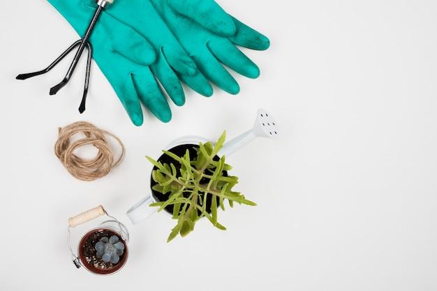 Bovenaanzicht van plant in gieter en handschoenen