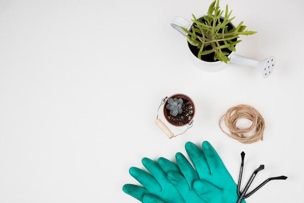Bovenaanzicht van planten en blauwe handschoenen