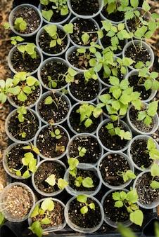 Bovenaanzicht van planten in plastic potten