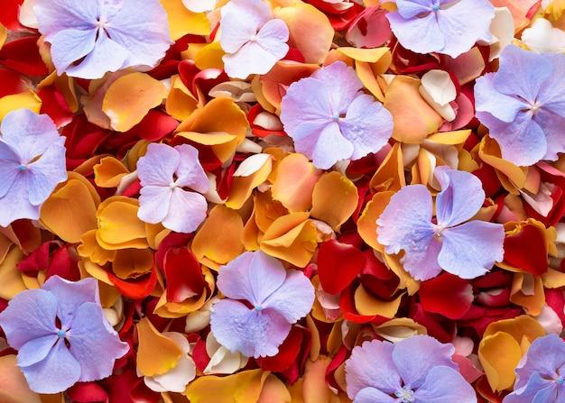 Bovenaanzicht van prachtig gekleurde bloemen