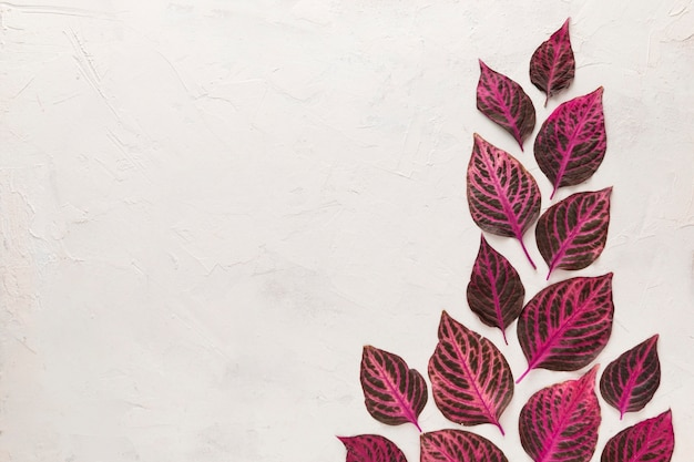 Bovenaanzicht van prachtig gekleurde herfstbladeren met kopie ruimte