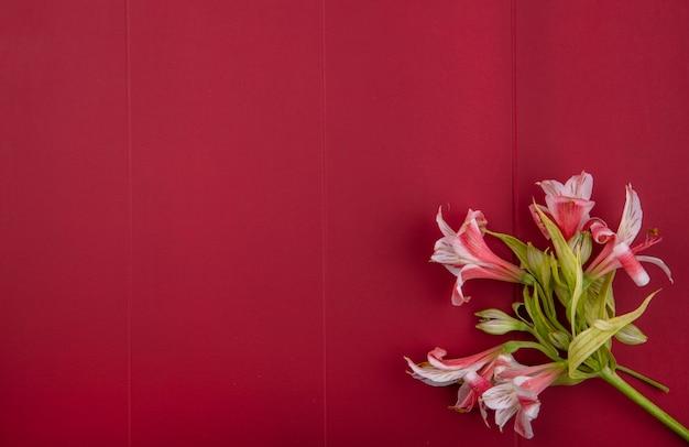 Bovenaanzicht van roze lelies op een rode ondergrond