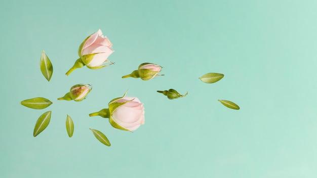Bovenaanzicht van roze lente rozen met bladeren Gratis Foto