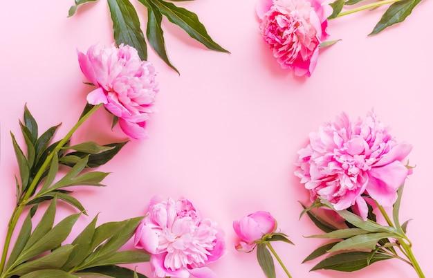 Bovenaanzicht van roze pioenroos bloemen met kopie ruimte. ruimte voor tekst.