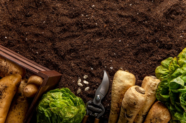 Bovenaanzicht van salade met groenten en kopie ruimte