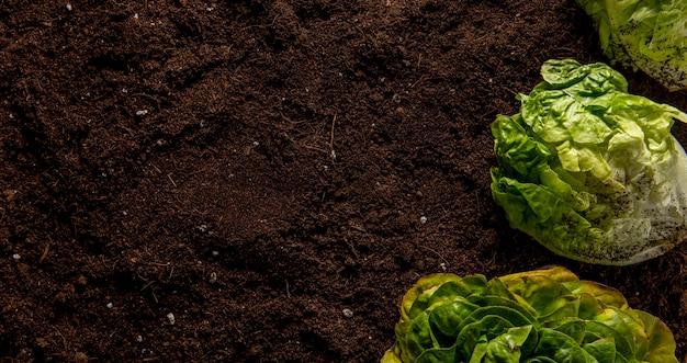 Bovenaanzicht van salade met kopie ruimte