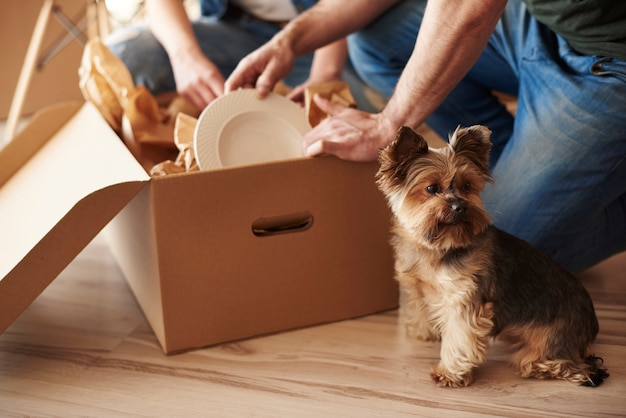 Bovenaanzicht van schattige hond en baasjes Gratis Foto