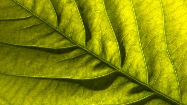 Bovenaanzicht van tropisch blad