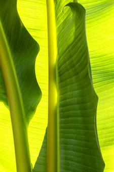 Bovenaanzicht van tropisch groen