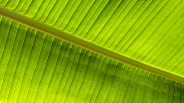 Bovenaanzicht van tropische bladplant