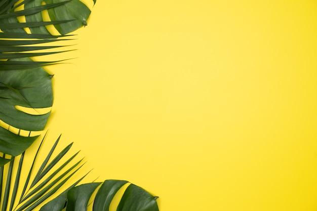 Bovenaanzicht van tropische palm bladeren tak geïsoleerd op heldere gele achtergrond met kopie ruimte.
