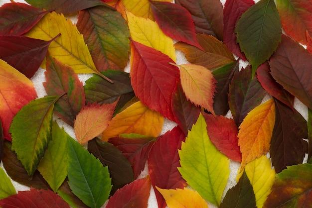 Bovenaanzicht van veel gekleurde bladeren