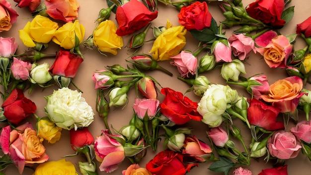 Bovenaanzicht van veelkleurige bloemen