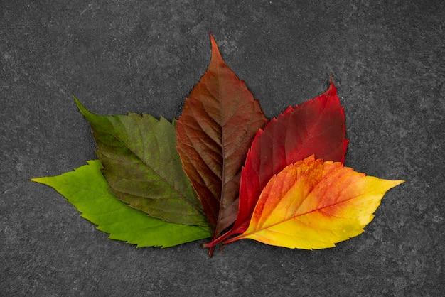 Bovenaanzicht van verschillende gekleurde bladeren