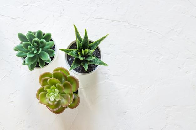 Bovenaanzicht van verschillende kleine cactussen in witte potten op concrete achtergrond. interieur decoratie. kopieer ruimte