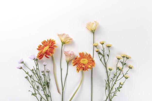 Bovenaanzicht van verse bloemen geïsoleerd op een witte muur