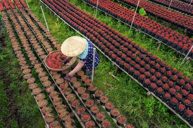 Bovenaanzicht van vietnamese boer die werkt met rode bloementuin in sadec