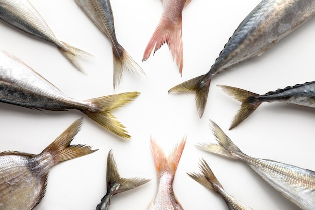 Bovenaanzicht van vissenstaarten in cirkel