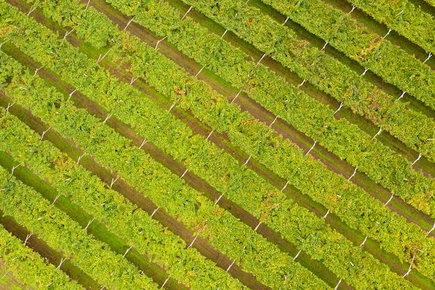 Bovenaanzicht van wijngaarden. europa italië.