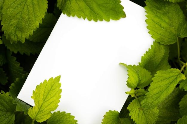 Bovenaanzicht van witboek over groene balsem muntblaadjes