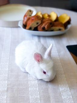 Bovenaanzicht van witte paashaas op tafel.