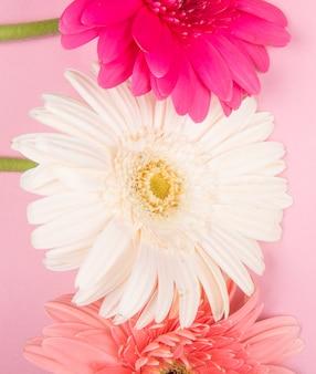 Bovenaanzicht van witte roze en fuchsia kleur gerbera bloemen geïsoleerd op roze achtergrond