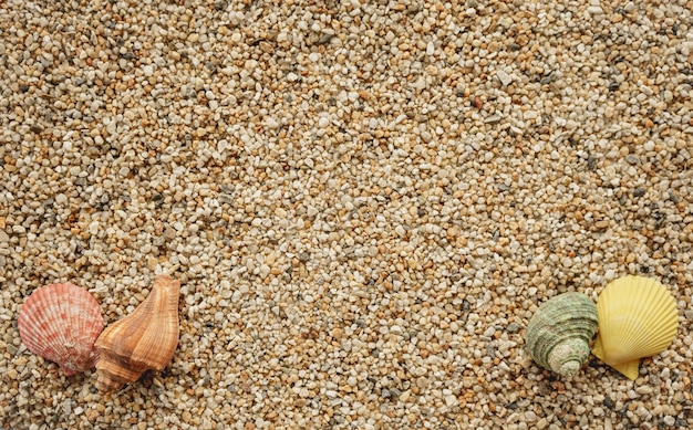 Bovenaanzicht van zand met schelpen