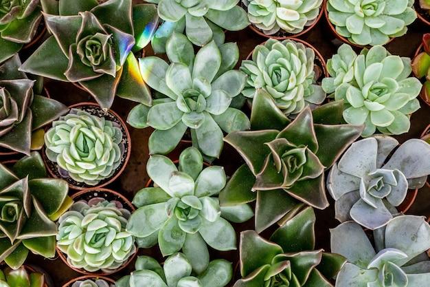 Bovenaanzicht vele soorten vetplanten in pottenteelt voor het maken van moderne kunst-botaniecomposities