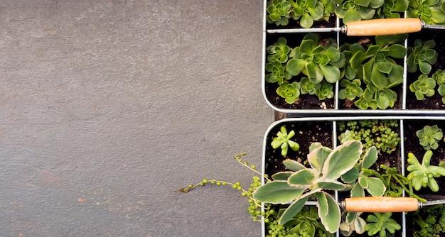 Bovenaanzicht verschillende planten in potten met kopie ruimte
