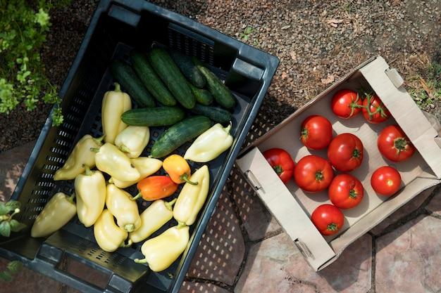 Bovenaanzicht verse groenten uit een kas