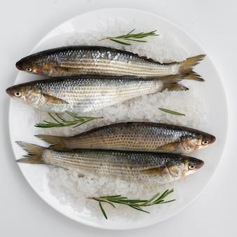 Bovenaanzicht verse makrelen op een plaat