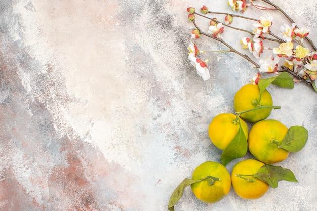 Bovenaanzicht verse mandarijnen abrikozenbloesem tak op naakte achtergrond