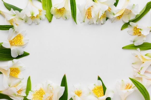 Bovenaanzicht wit alstroemeria frame