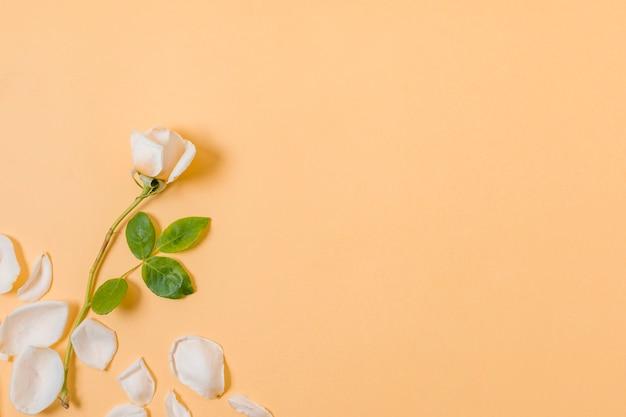 Bovenaanzicht witte bloemblaadjes met kopie ruimte
