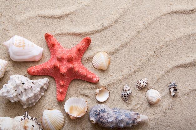 Bovenaanzicht zeester en schelpen op het zand
