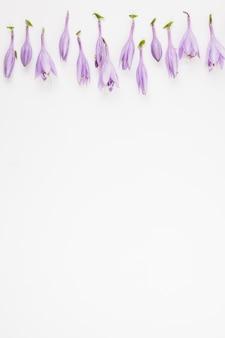Bovenrand van witte achtergrond versierd met paarse bloemen