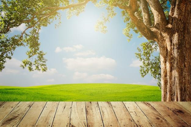 Bovenste lege houten boom met groen gras en blauwe hemelachtergrond