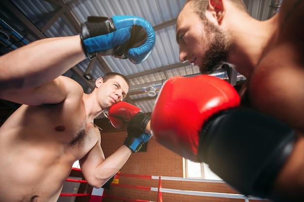 Boxer stuurt zijn tegenstander naar de knock-out.